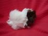 baby-guinea-pigs-51c2fbae2fb14