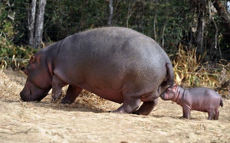 Hippo Baby Food Website
