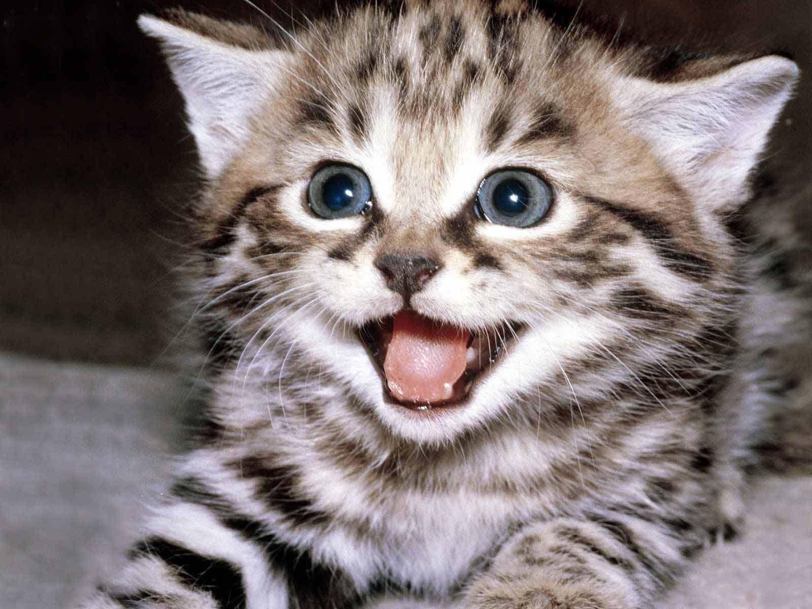 [Image: happy-kitten-kittens-5890512-1600-1200.jpg]