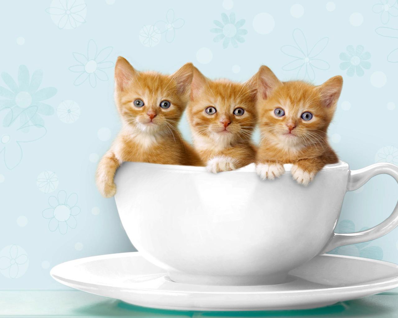 2048 Kittens