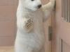 standing_polar_bear