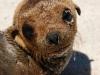 mosquera-baby-sea-lion_jpg