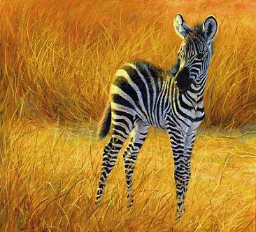 Baby Zebras In Africa Baby Zebras