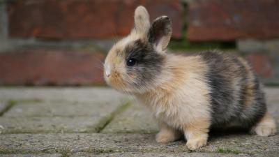 baby-rabbit-bricks
