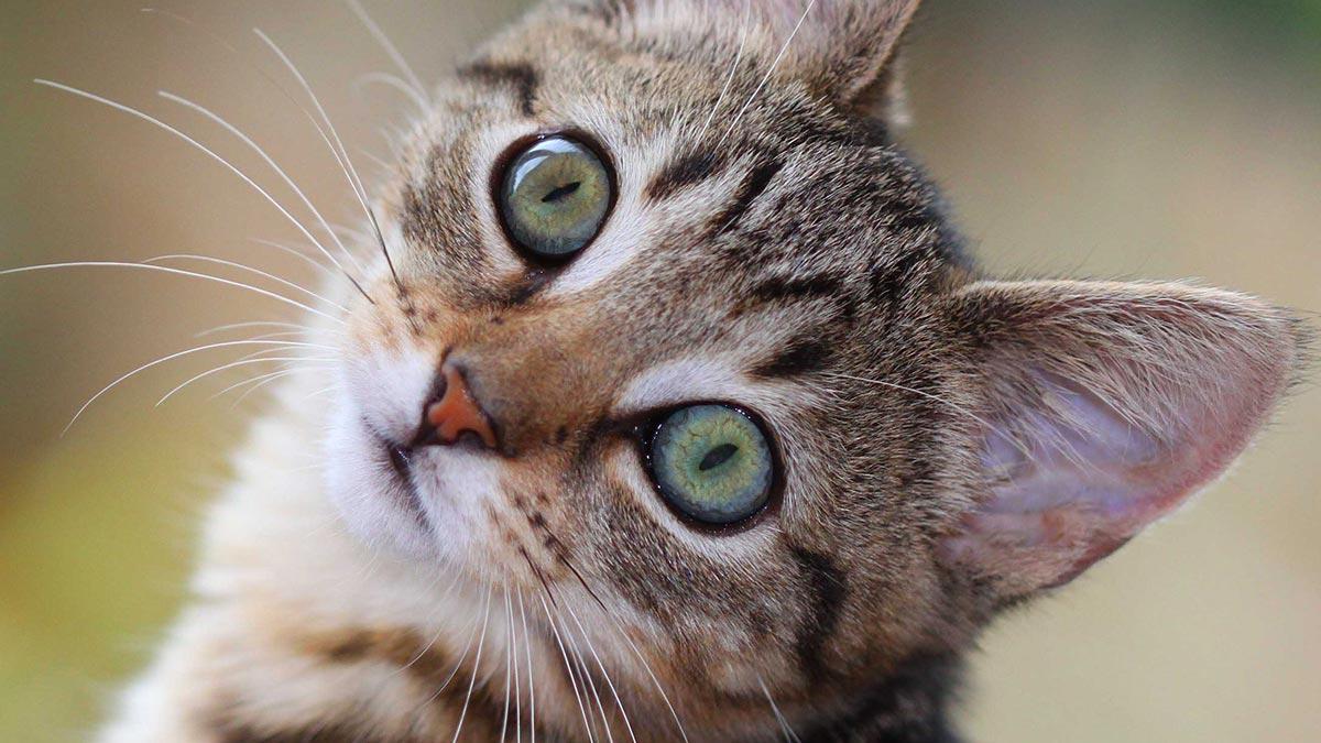 kitten-green-eyes